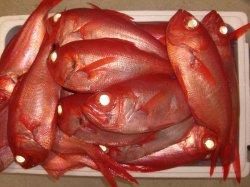 画像5: 海産屋のお得な金目鯛セット!!
